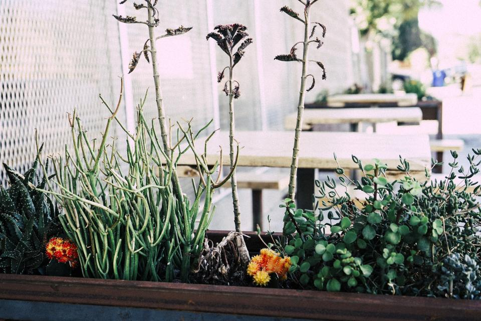 plants in outdoor entertaining space